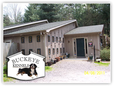 Asheville Kennels, Dog Boarding, Dog Daycare and Grooming
