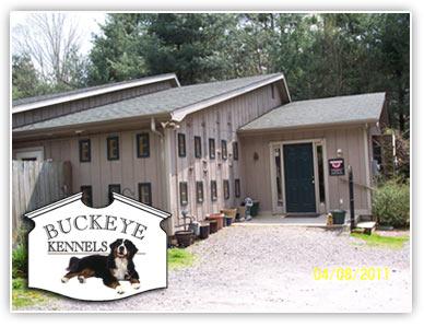 Dog Grooming Asheville North Carolina